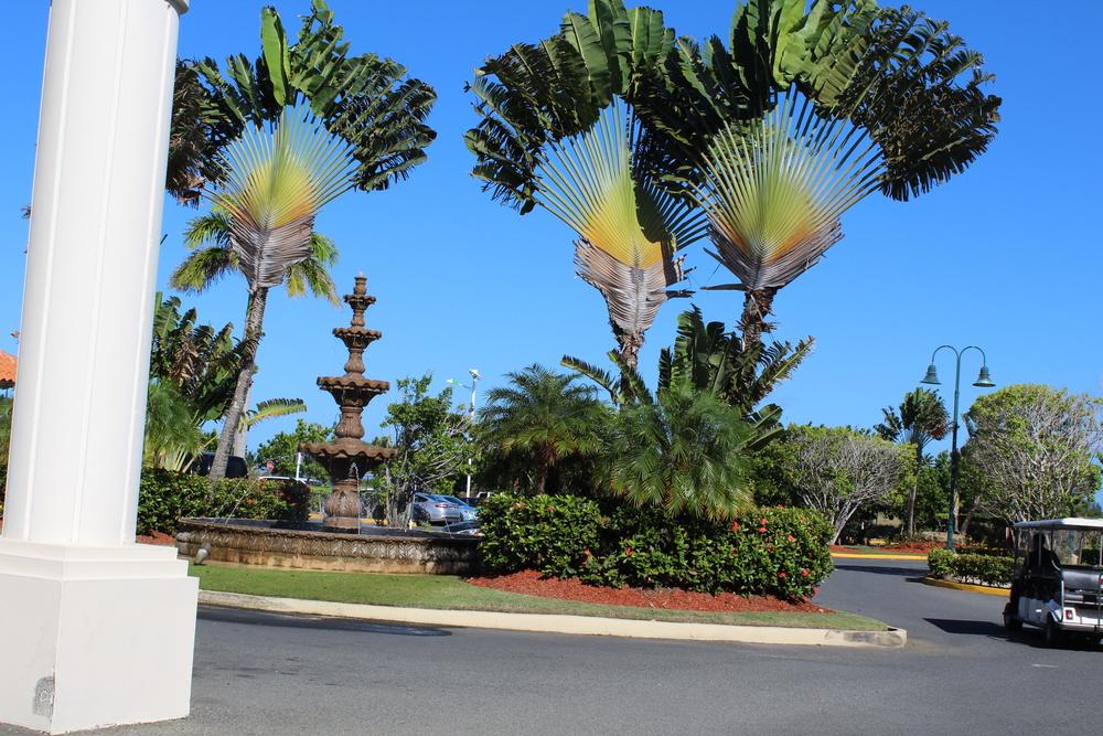 Entrance palms.jpg