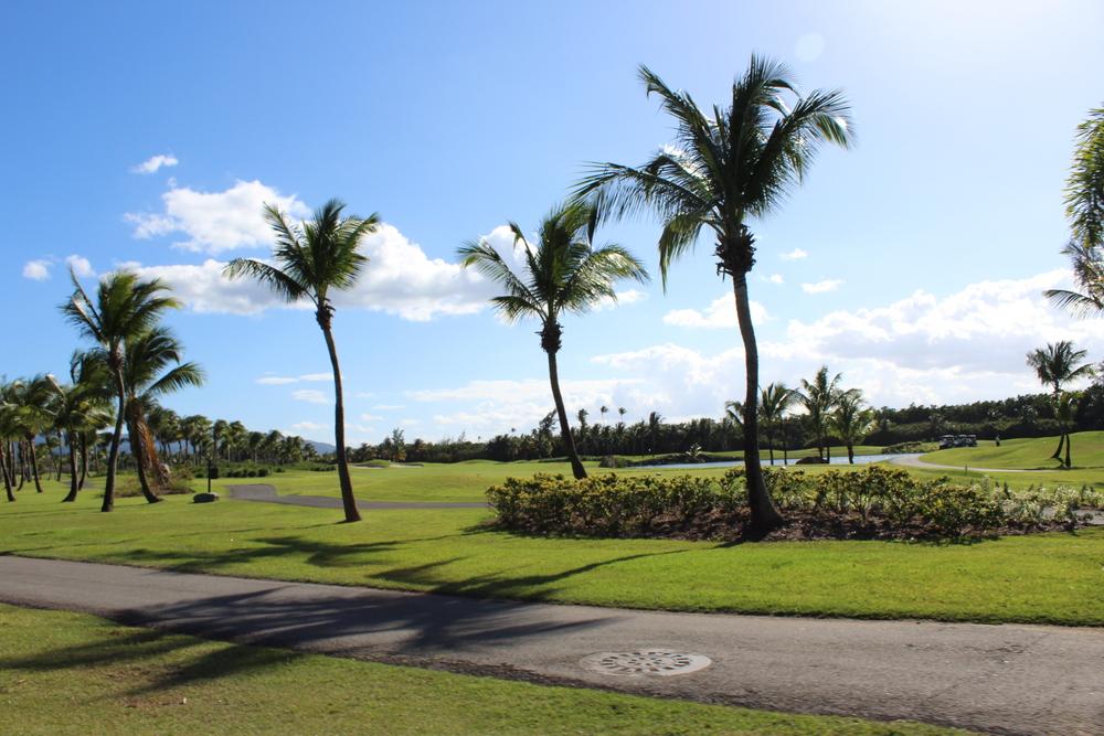 Golf Field.jpg
