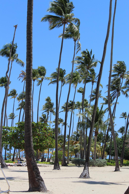 Coco Beach2.jpg