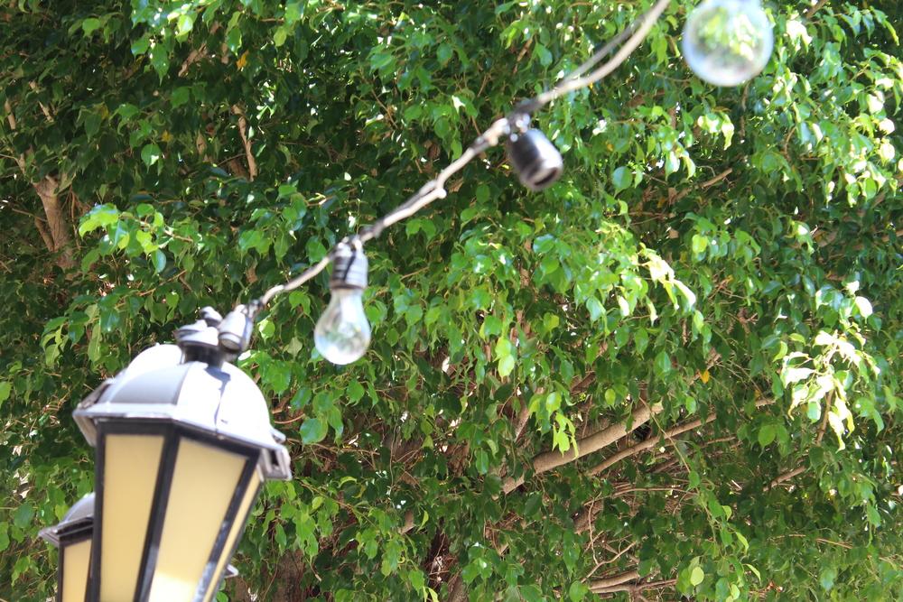 lamp.lights.jpg