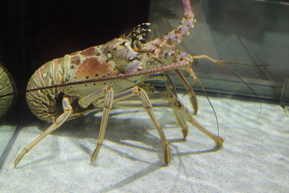 Live Crab.jpg