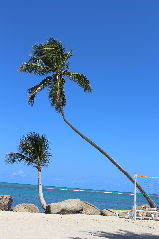 Tilted palm.jpg