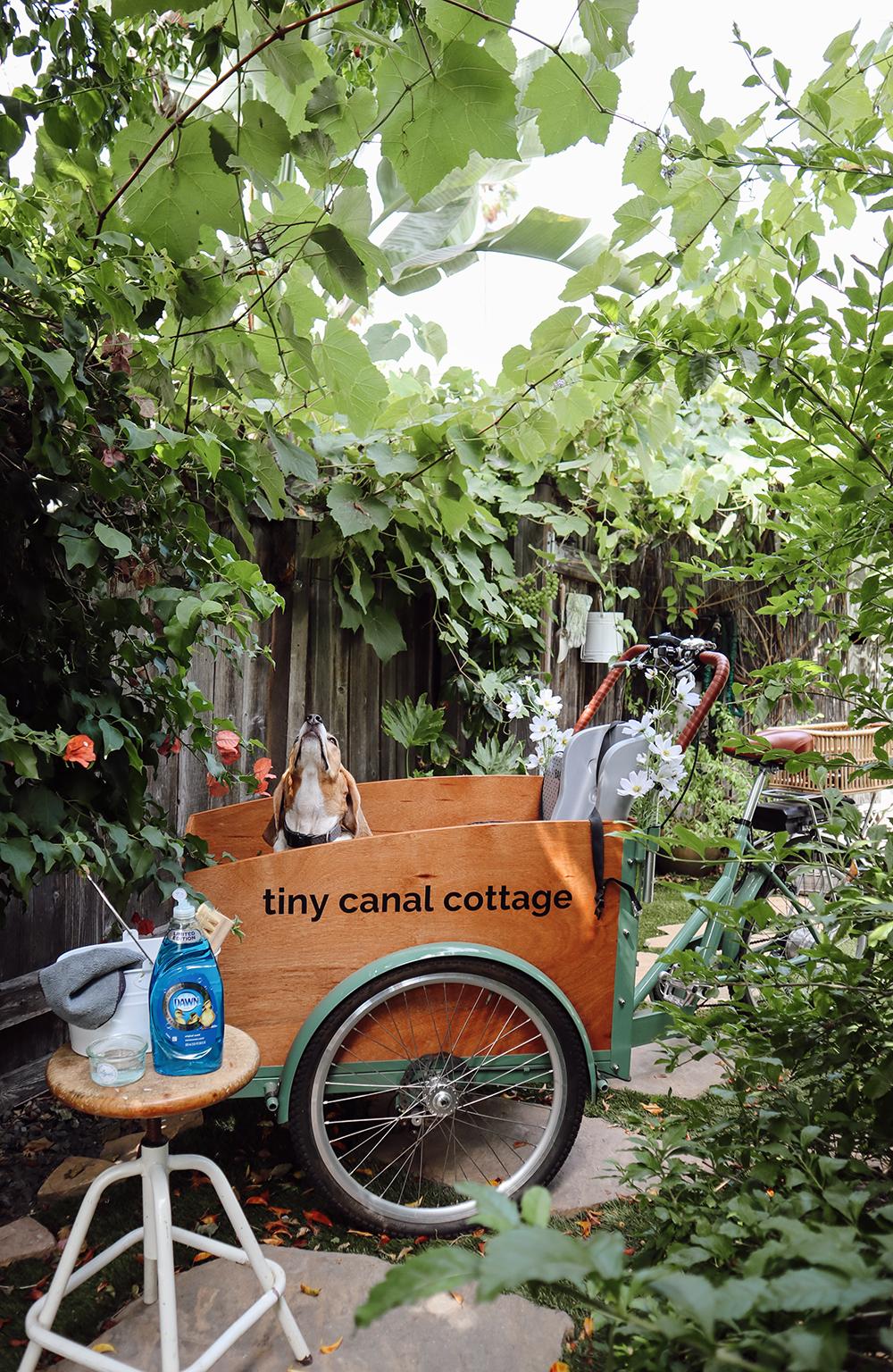 beagle_bike_cleaning.jpg