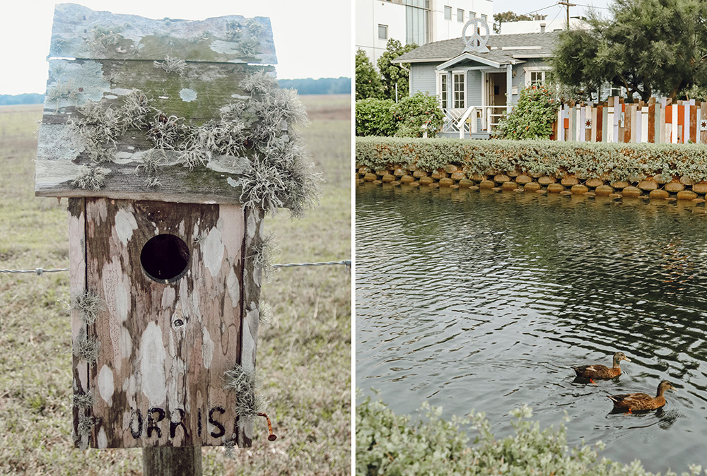 Left - The old handmade Morris birdhouse on the prairie where I grew up. Right - Ducks on the Canals by our tiny home in Venice.