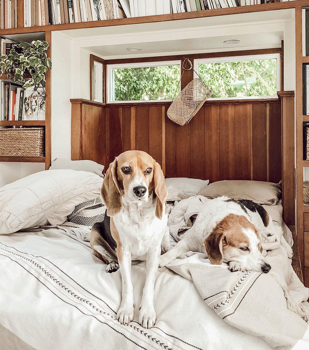 pups bed.jpg