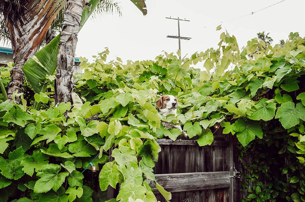 stanlee vines.jpg