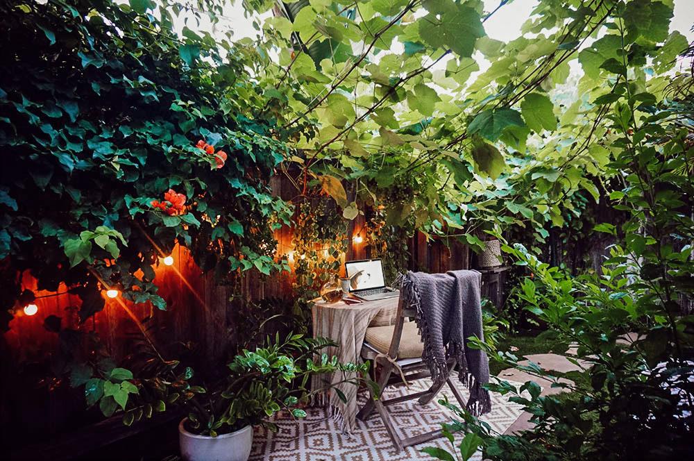 vine canopy.jpg