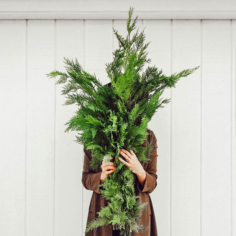 blog_tinyhousegreenery.jpg