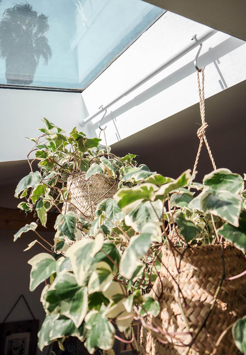 smallspace_plants4.jpg