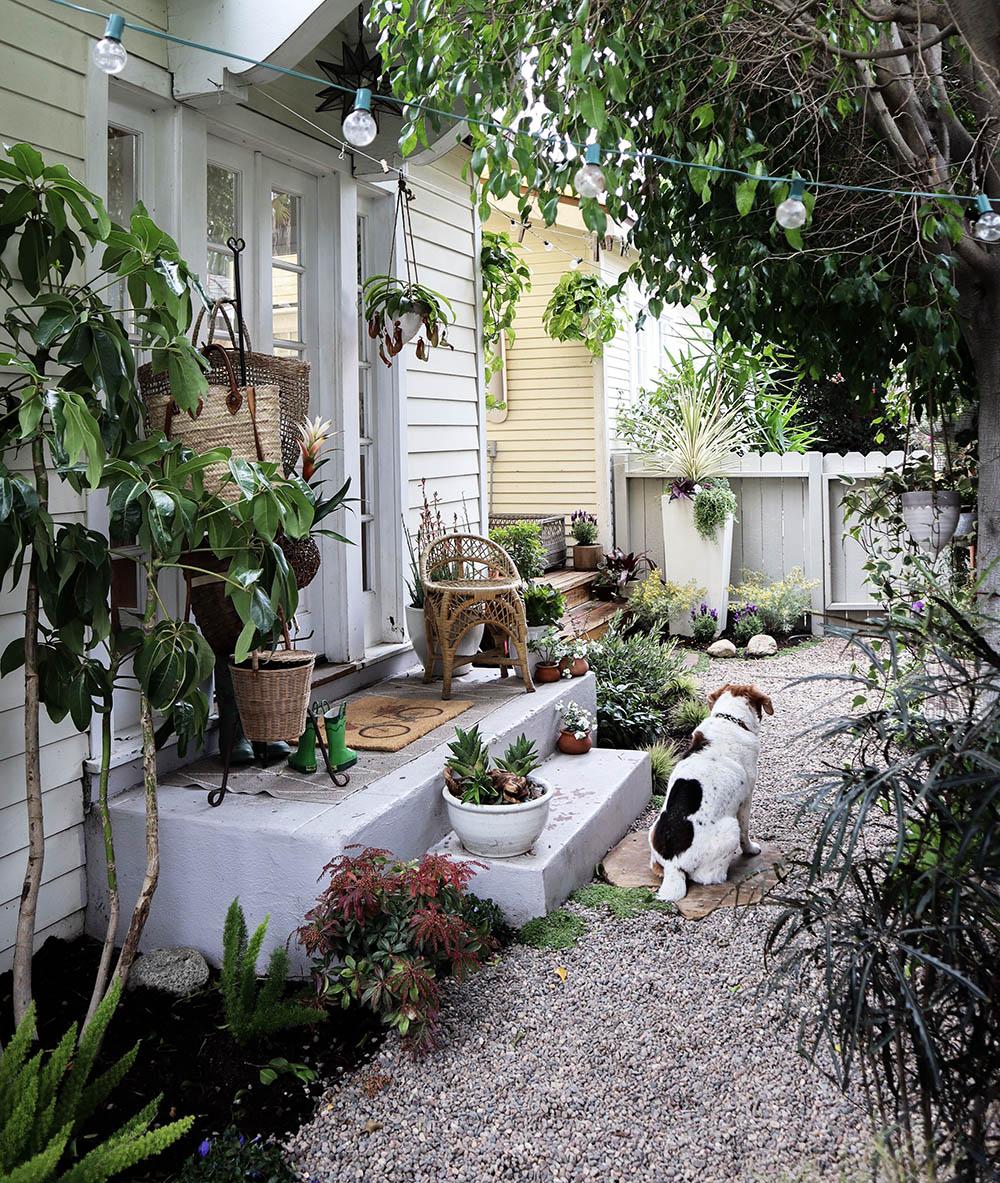 tinyhouse_garden_beagle.jpg