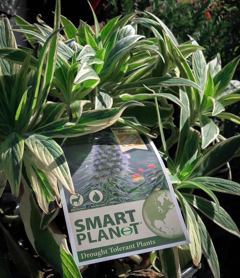 droughtplants.jpg