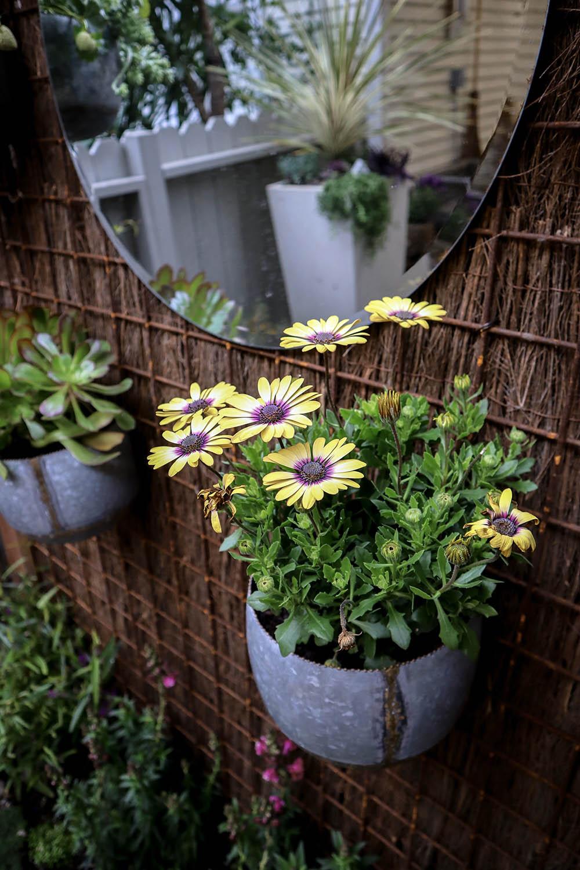 wallplants.jpg
