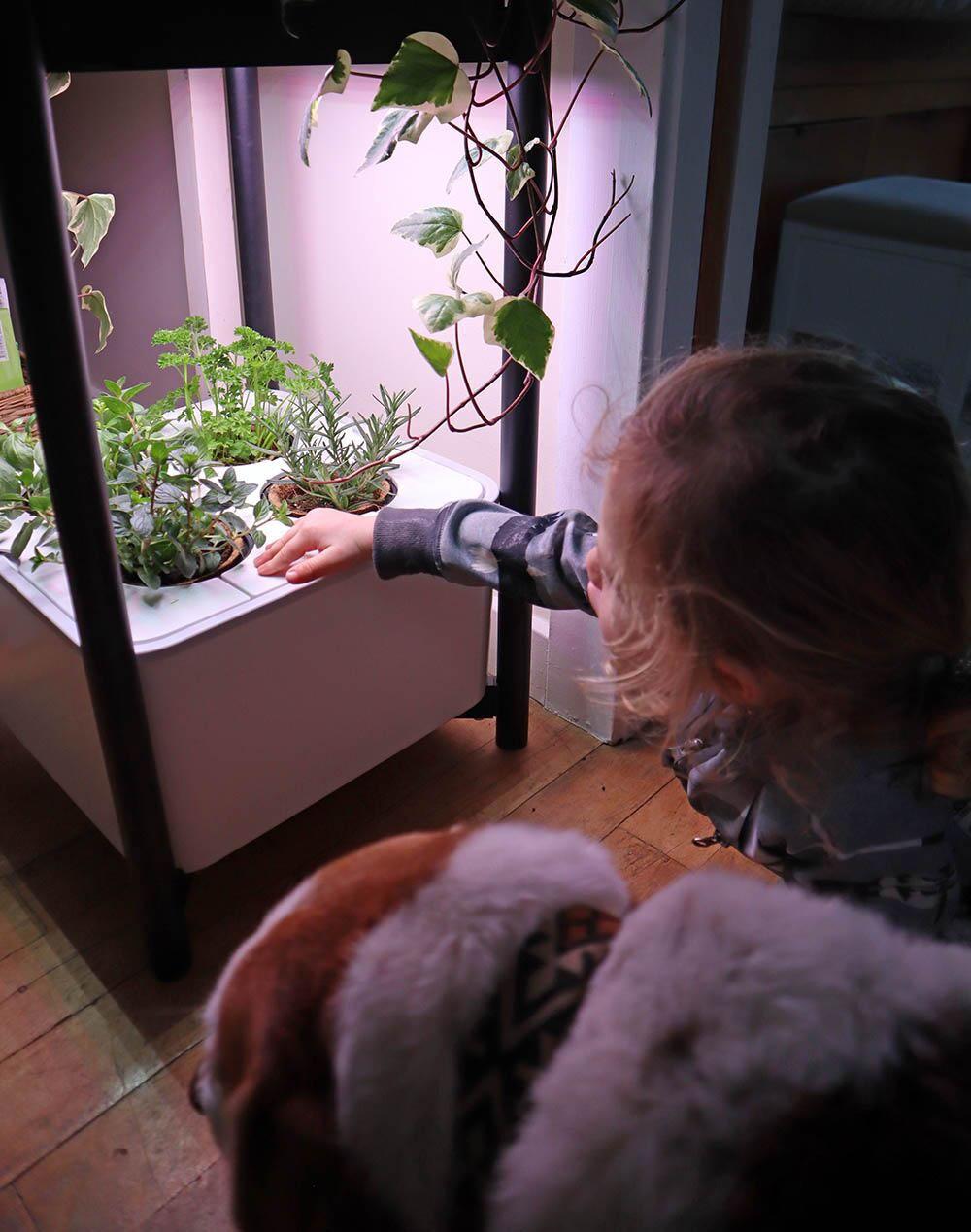nightime_growing_plants.jpg