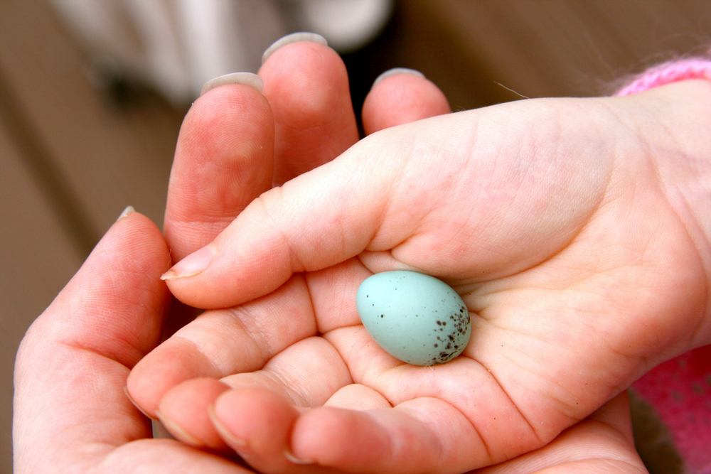 Mud Pie and I hold a tiny Robin egg