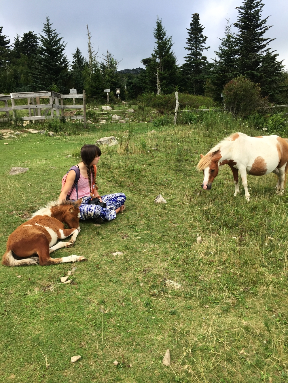 THE NOT-SO-WILD PONIES AT GRAYSON HIGHLANDS STATE PARK
