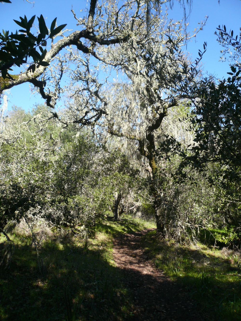 Sonoma Overlook Trail, December 2014