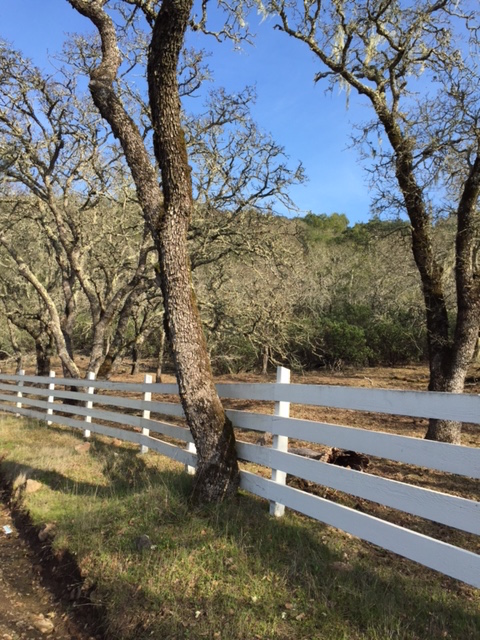 Lovall Valley Road, Sonoma, CA January 2015