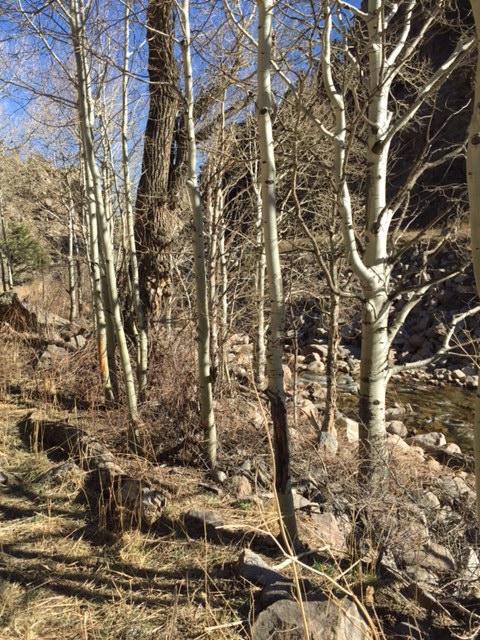 Boulder Creek Trail 3-10-2016.jpg