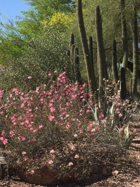 Cactus and dusty pink flowers.jpg