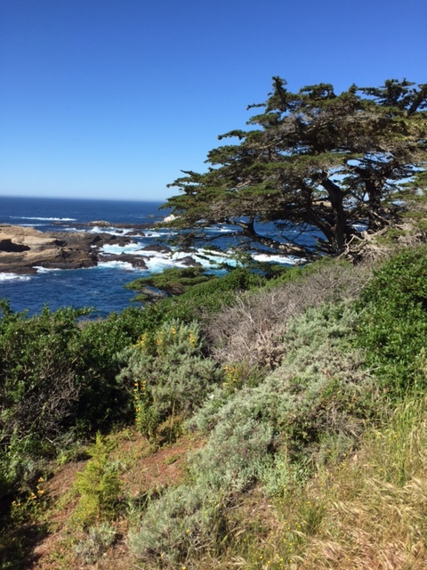 Point Lobos: Saturday hike