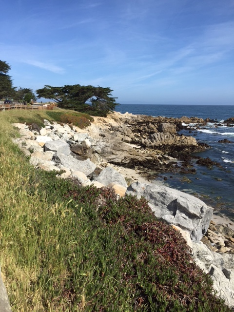 Monterey Bay: Friday morning walk complete with mother and baby Harbor seals