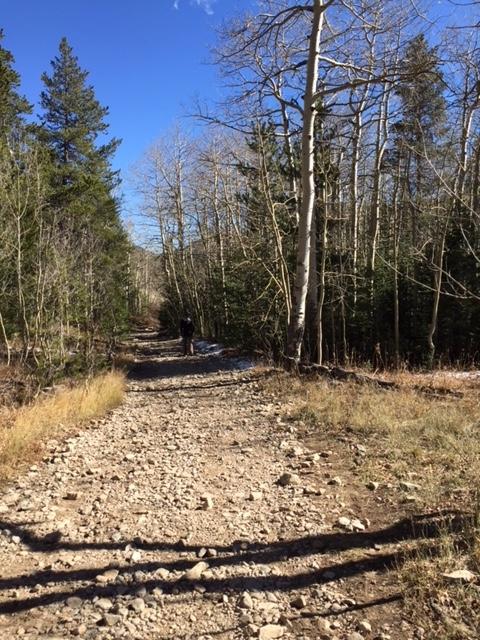 Aspen trail.jpg