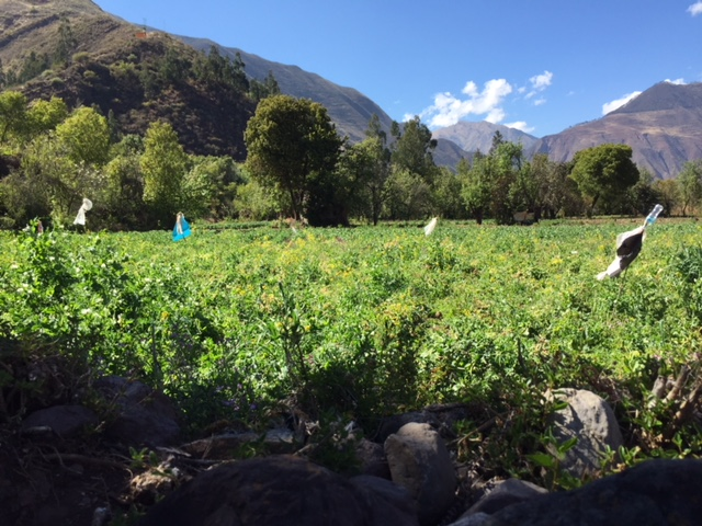 Fertile lands around Cusco still perfect for producing fruits, vegetables and grains.