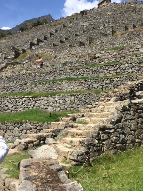 Looking toward Machu Picchu high gate above terraces, a reminder of the size of this palace.