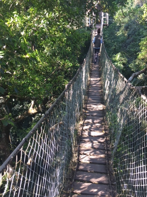 Canopy walk 100' above jungle floor at Amazon River Basin.