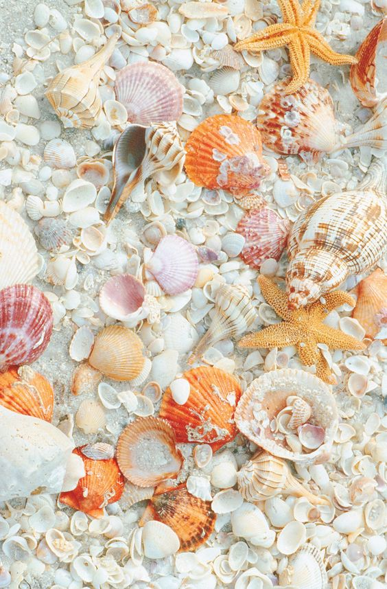 she sell seashells