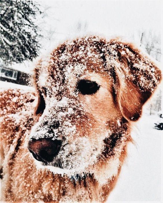 snow pup.jpg