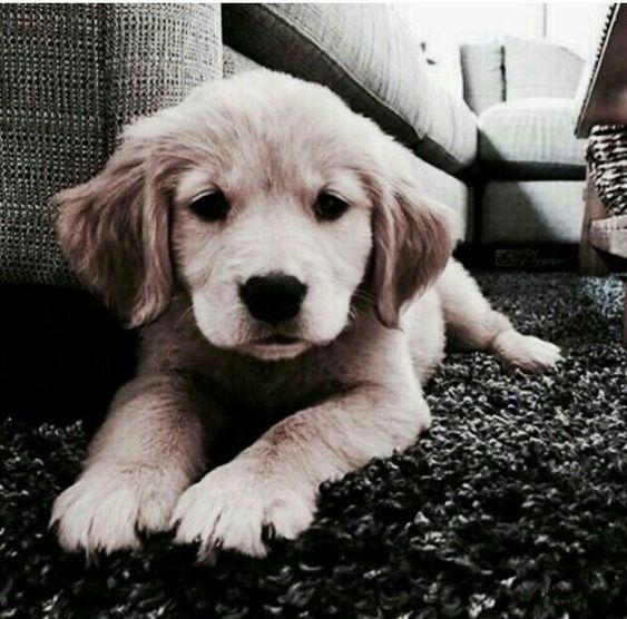 hey pup