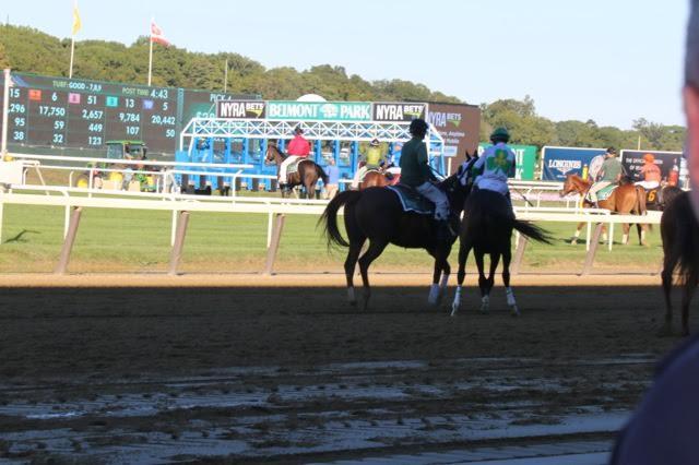 pts 16 horses.jpg