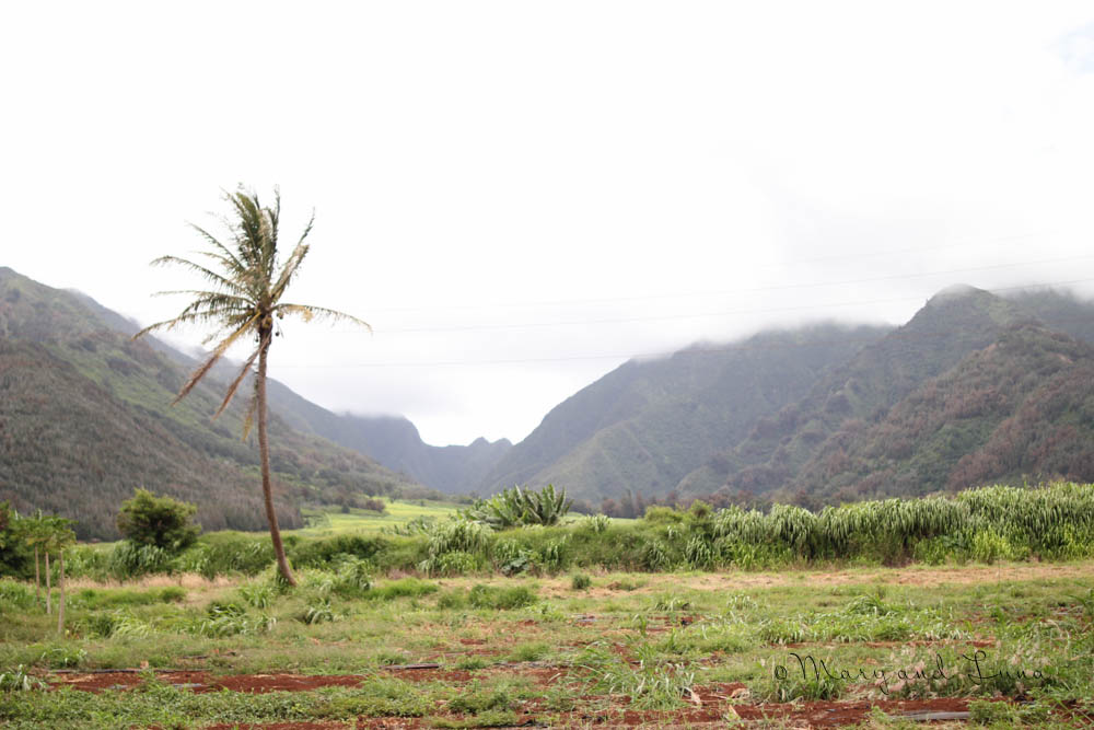 another maui planation photo