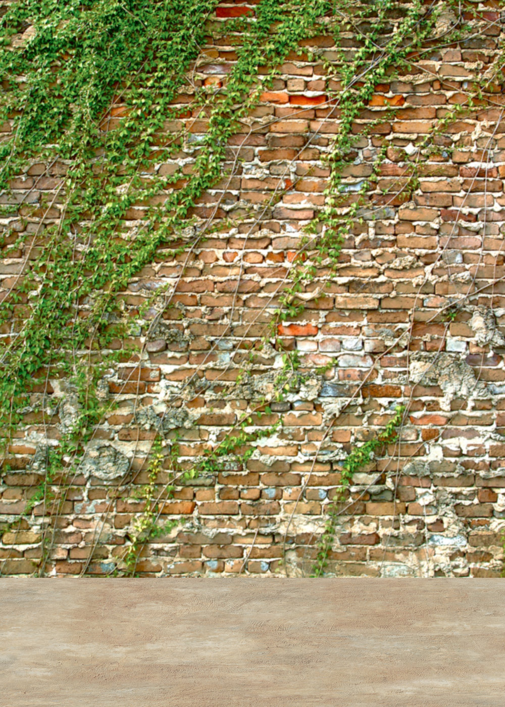 Background L - Ivy Wall