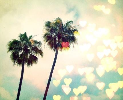 palm-in-sun.jpg