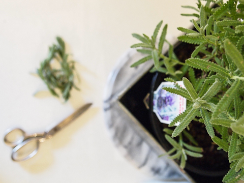lavender-2-1-of-1.jpg