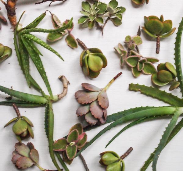 succulents-1-of-1.jpg