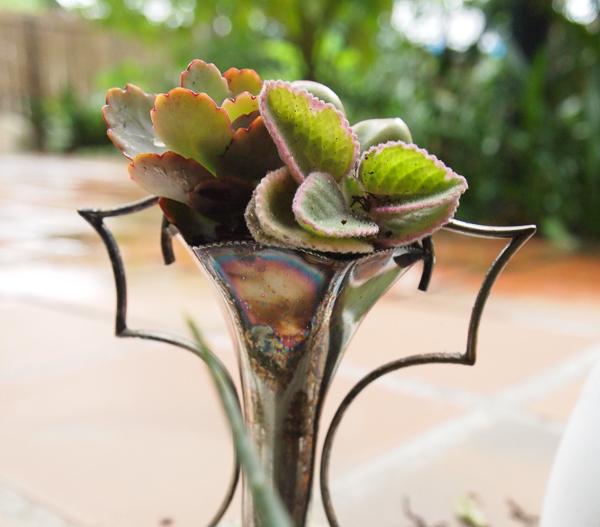 succulents-5-1-of-1.jpg