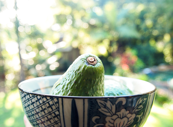 the-avocado-trick-1-of-1.jpg