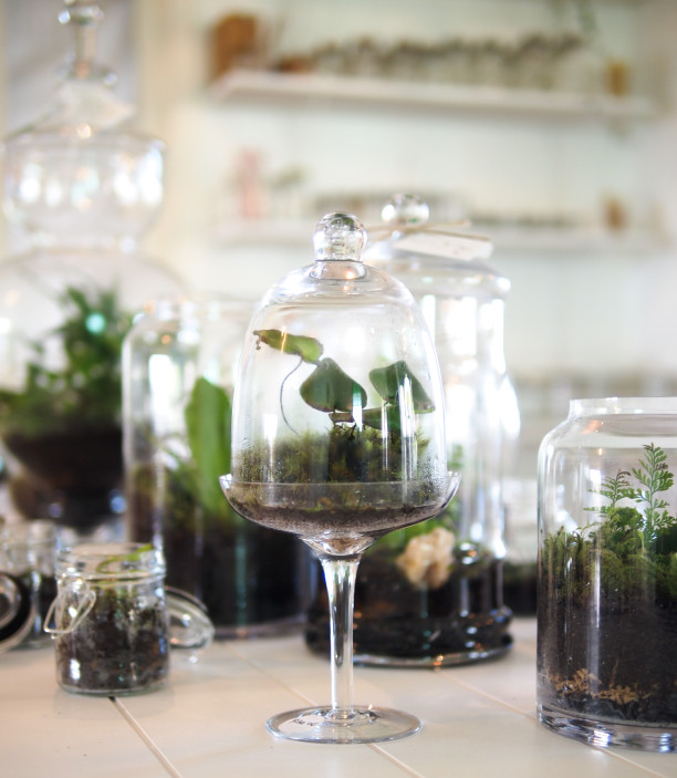 showroom terrarium workshop