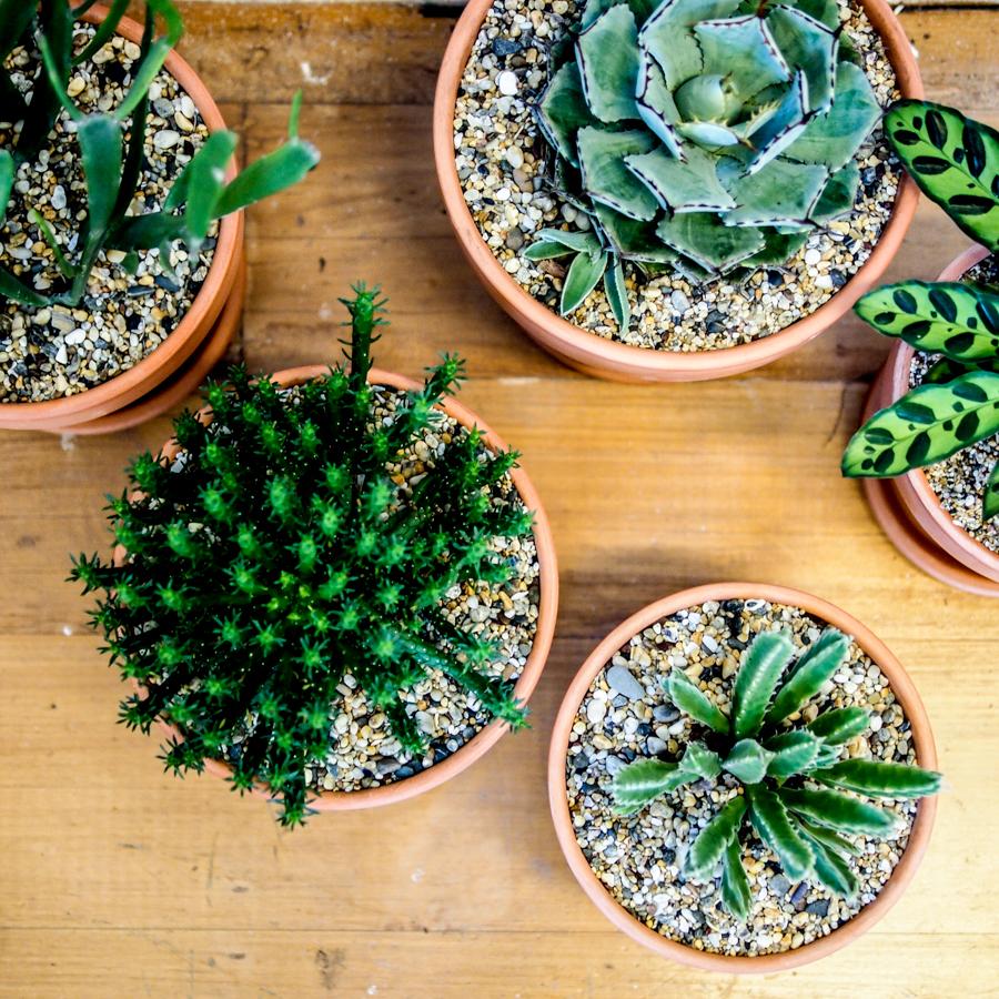 small garden 3.jpg