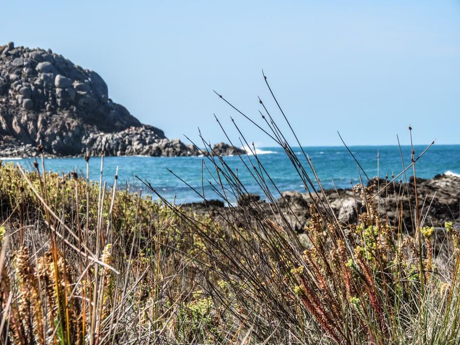 Coastal SA 5.jpg