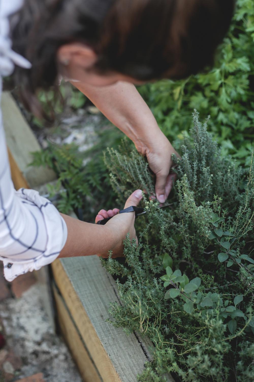 herb_garden_brisbane.jpg