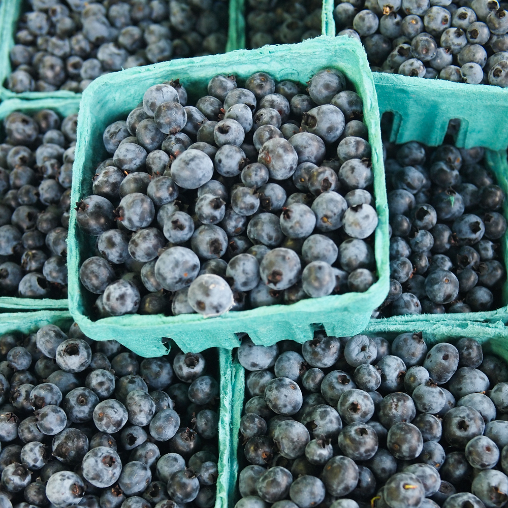 wild blueberries 2.jpg