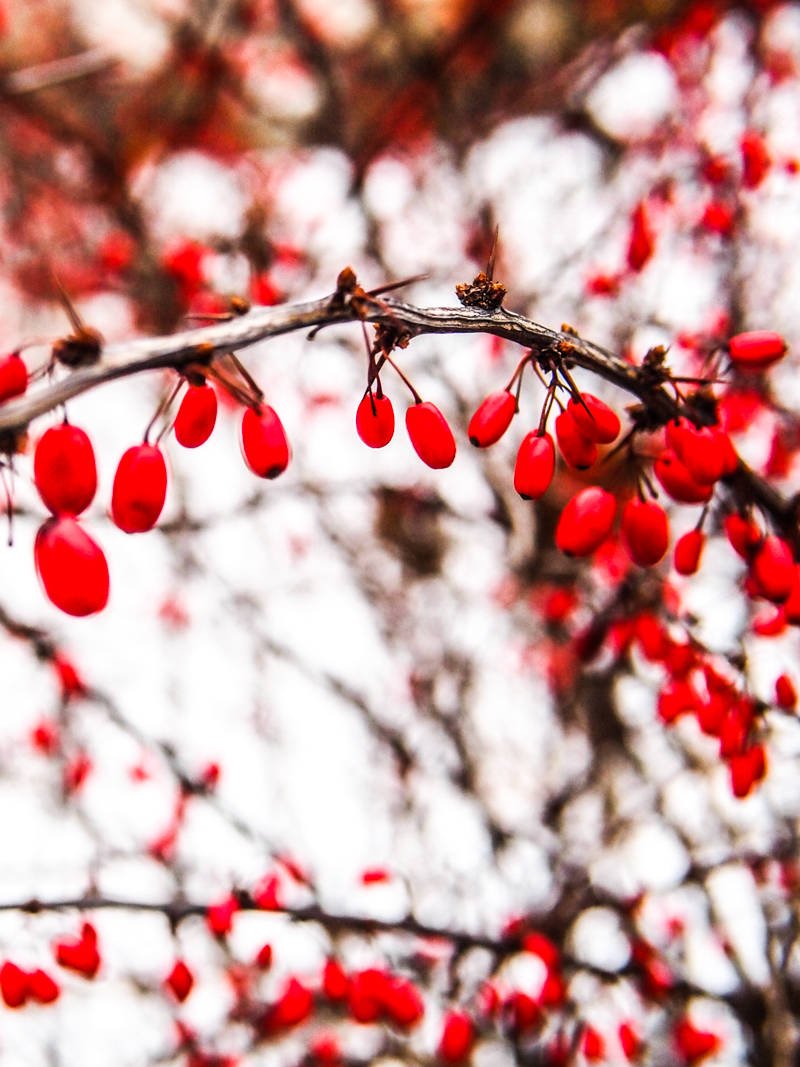 toronto-winter.jpg
