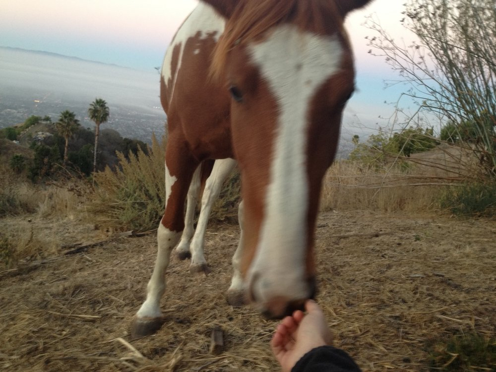 A horse, Bonita (Spanish for beautiful), approaching me while praying on a mountain above Silicon Valley.