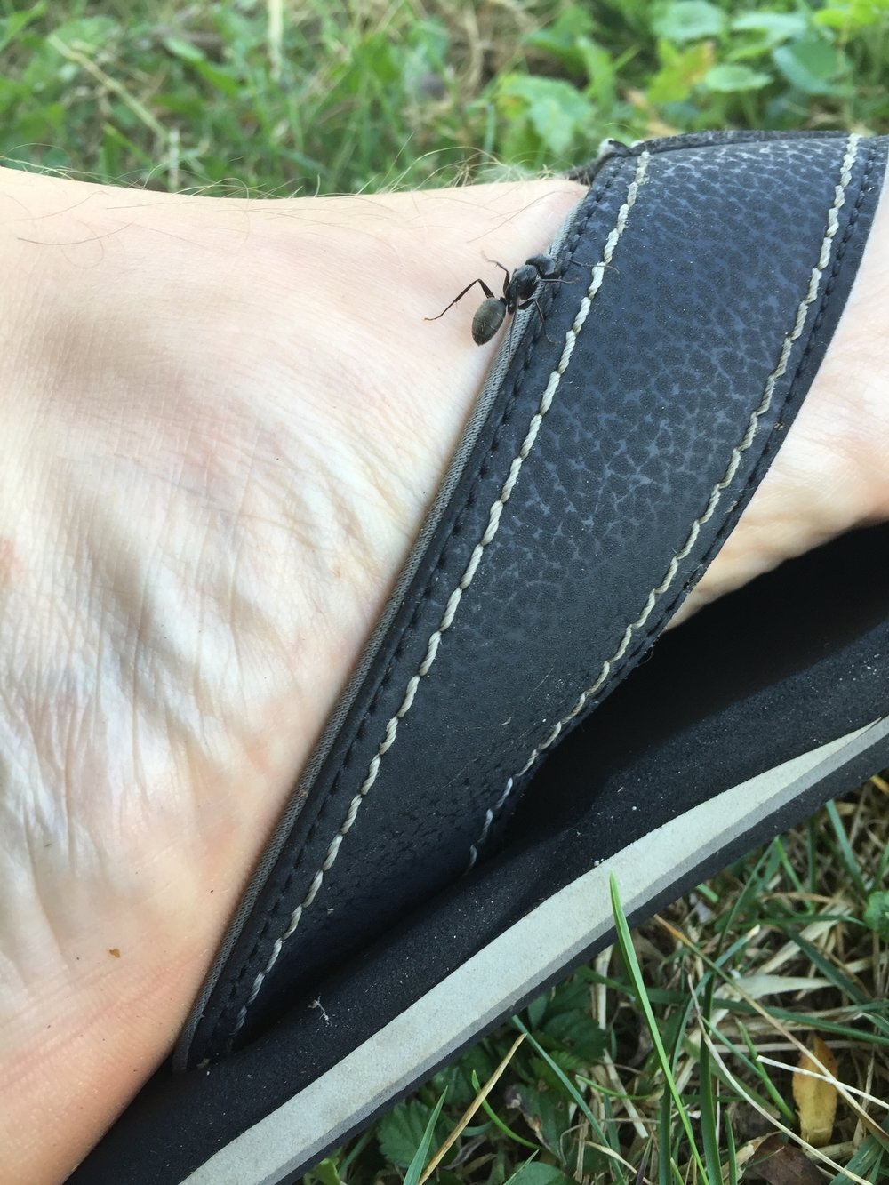 By far, the most populous insect on the ground are ants, so far as I can see. Everywhere I sit to pray, there are always ants criss-crossing before (and sometimes on) me.