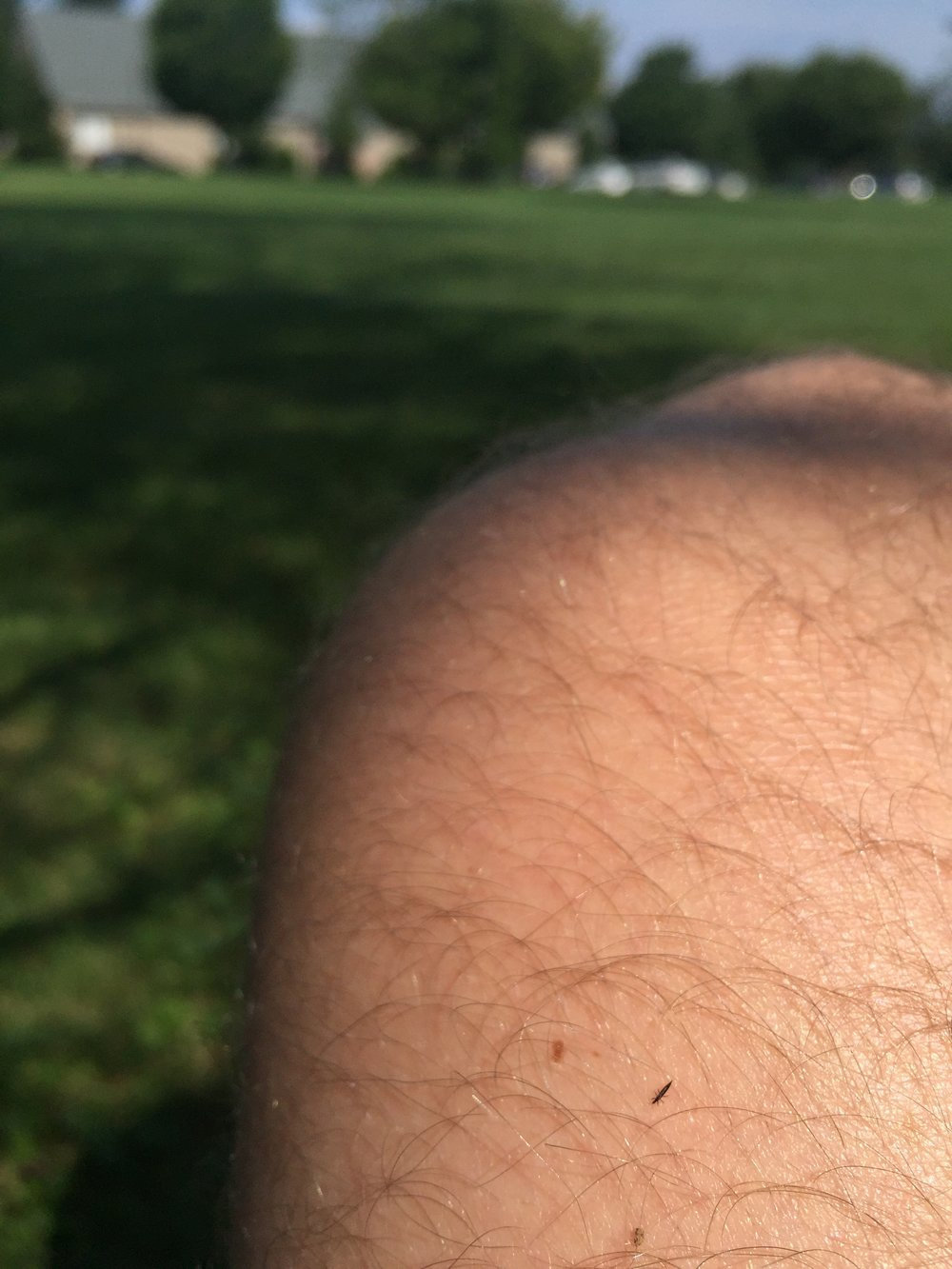 Sitting in nature = being crawled on by nature, often by these barely visible, tiny insects.