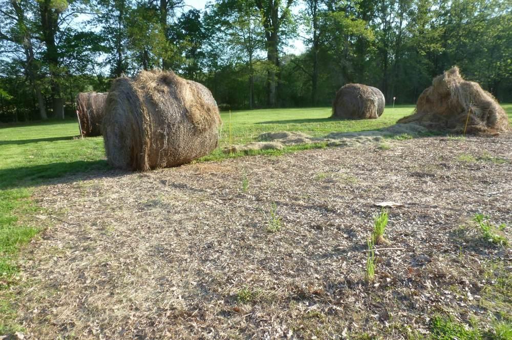 Hay on Garden